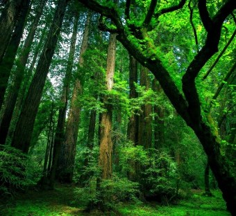 natural_green_forest_wallpaper.jpg